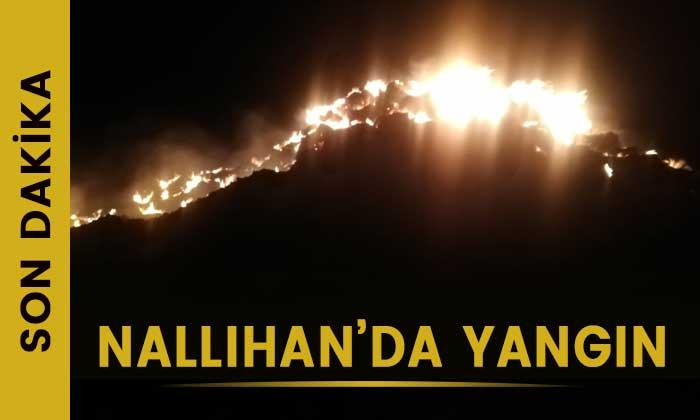 Nallıhan'da yangın!