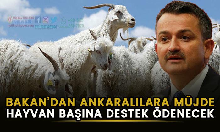 Bakan'dan Ankaralılara destek müjdesi