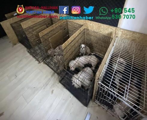 Ankara'da bodrumda 68 köpek bulundu