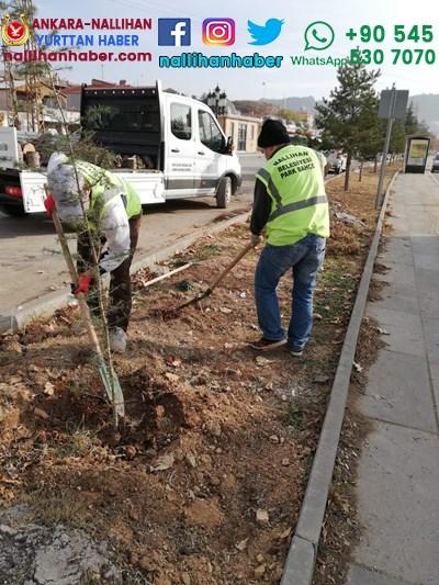 Nallıhan'a 820 ağaç dikildi