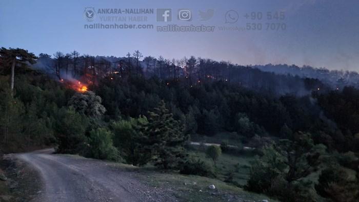 Nallıhan ekipleri orman yangınına koştu