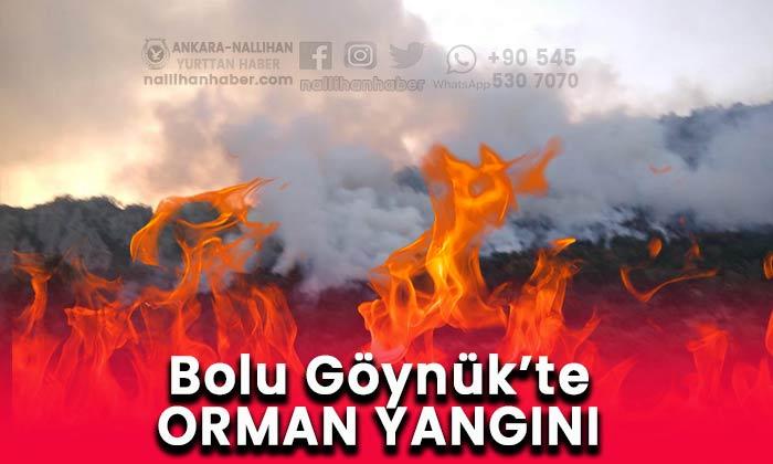 Göynük'te orman yangını!